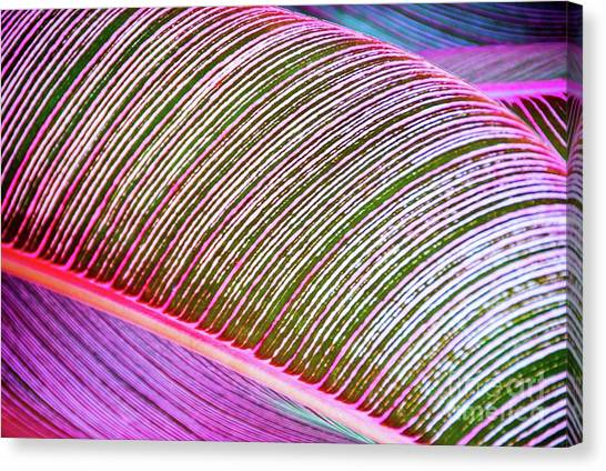 Leaves In Bright Colors 546 Canvas Print