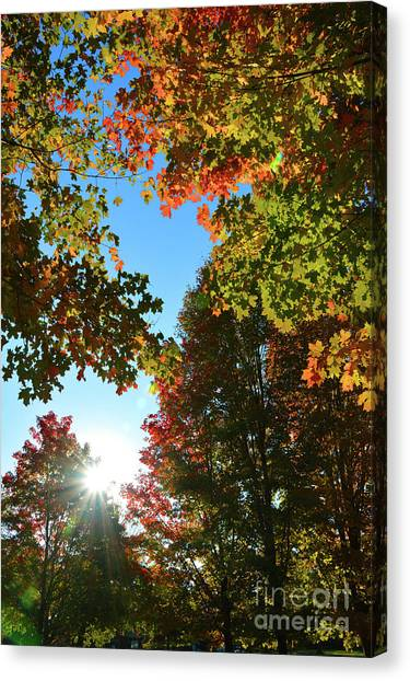 Leaves Of Change Canvas Print