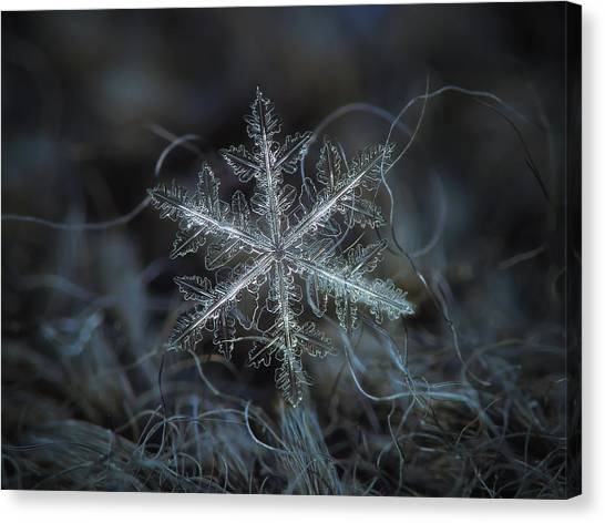 Canvas Print featuring the photograph Leaves Of Ice by Alexey Kljatov