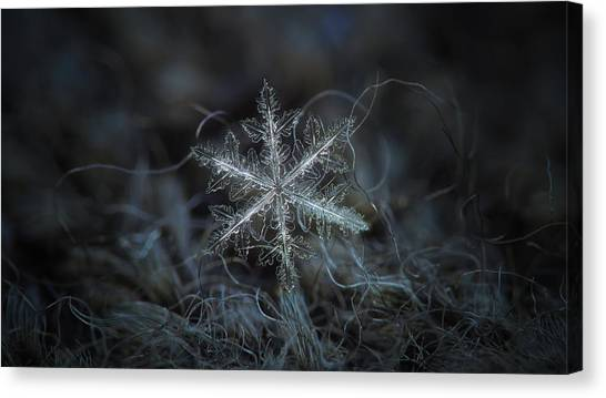 Leaves Of Ice, Panoramic Version Canvas Print