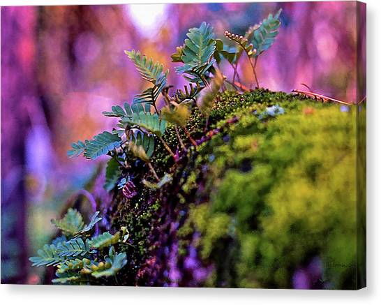 Leaves On A Log Canvas Print
