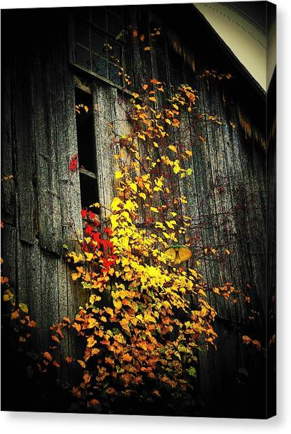 Leaves On An Old Barn Canvas Print