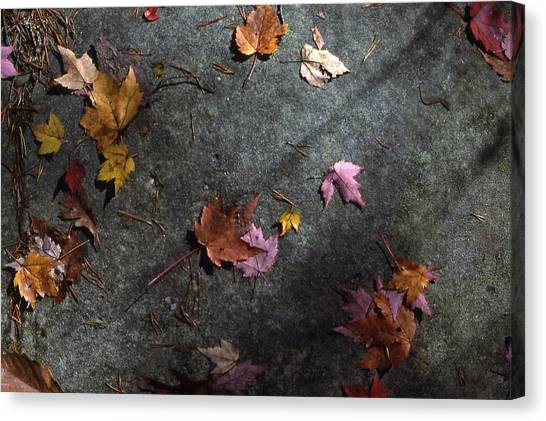 Leaves On Stone Canvas Print by Randy Muir