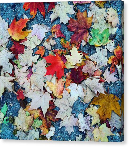 Leaves On The Sidewalk Canvas Print by Robert Nguyen