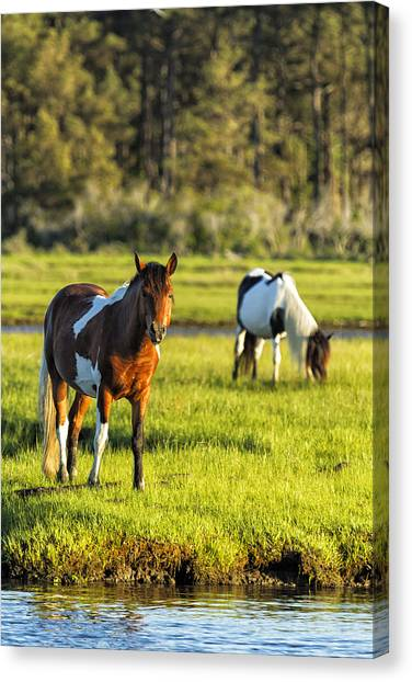 Canvas Print featuring the photograph Leaving The Chincoteague Ponies by Belinda Greb