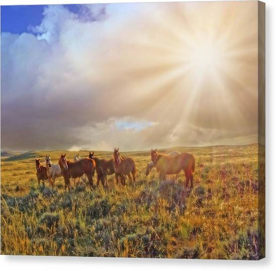 Led By The Light Canvas Print