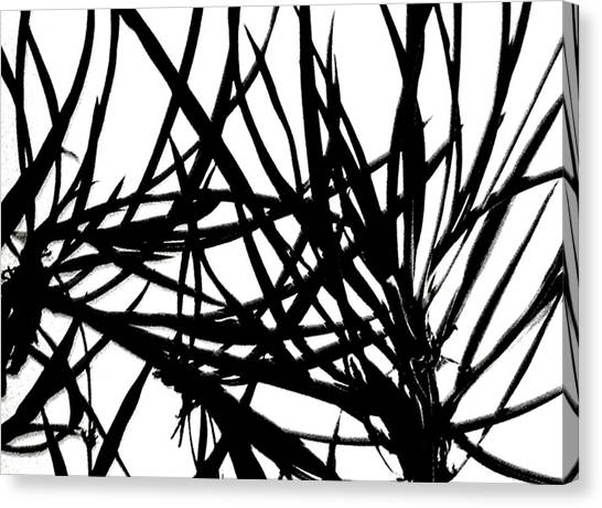 Lee Krasner Spider Plant Detail 1 Canvas Print