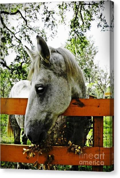 Draft Horses Canvas Print - Lee's Ranch 10 by Sarah Loft