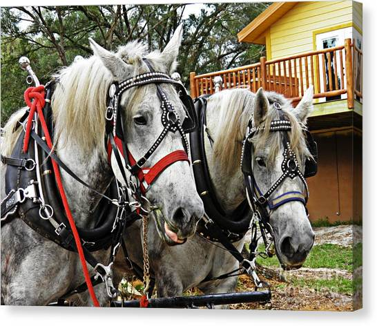 Draft Horses Canvas Print - Lee's Ranch 9 by Sarah Loft