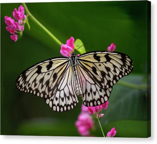 Leisurely Lunch Canvas Print