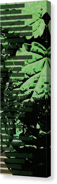 Chemisty Canvas Print - Lemon Balm by Pat DK