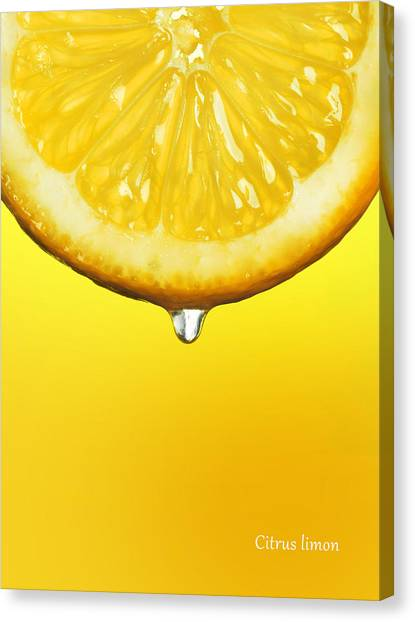 Lemons Canvas Print - Lemon Drop by Mark Rogan