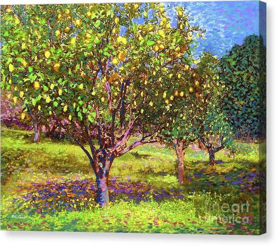 Harvest Canvas Print - Lemon Grove Of Citrus Fruit Trees by Jane Small