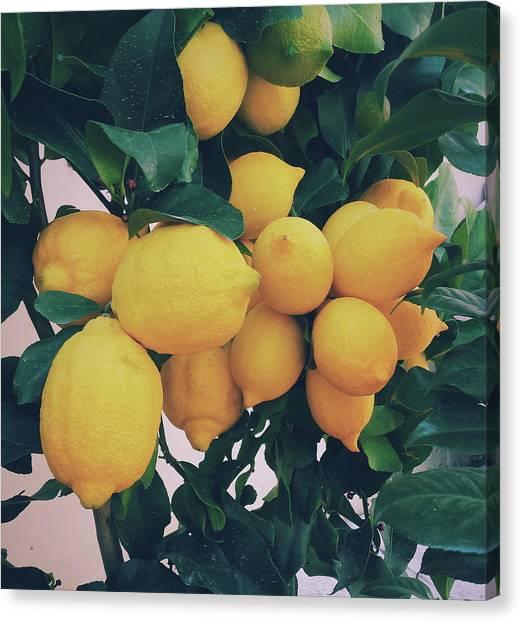 Fruit Trees Canvas Print - Lemon Tree by Happy Home Artistry