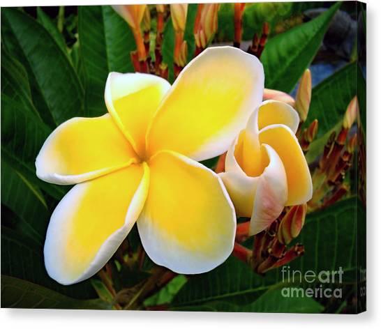 Lemon Yellow Plumeria Canvas Print