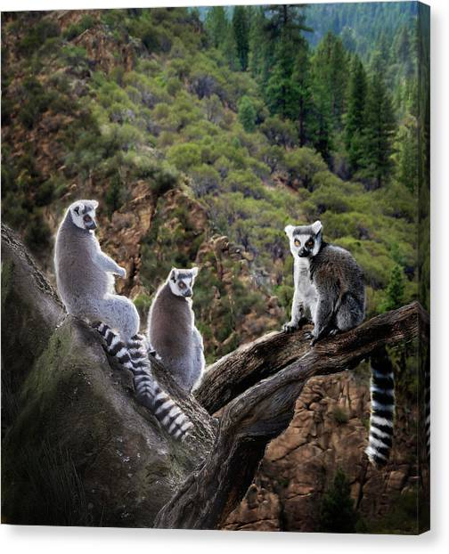 Canvas Print featuring the photograph Lemur Family by Melinda Hughes-Berland