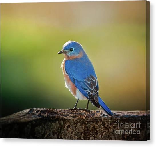 Lenore's Bluebird Canvas Print