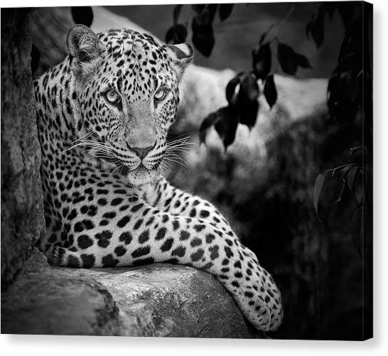 In Focus Canvas Print - Leopard by Cesar March