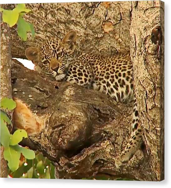 Leopard Cub Canvas Print