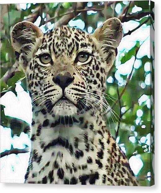 Leopard Face Canvas Print