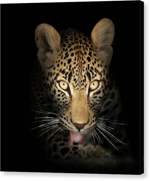 Predators Canvas Print - Leopard In The Dark by Johan Swanepoel