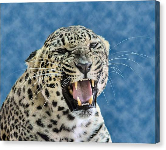 Leopard  Canvas Print by Keith Lovejoy