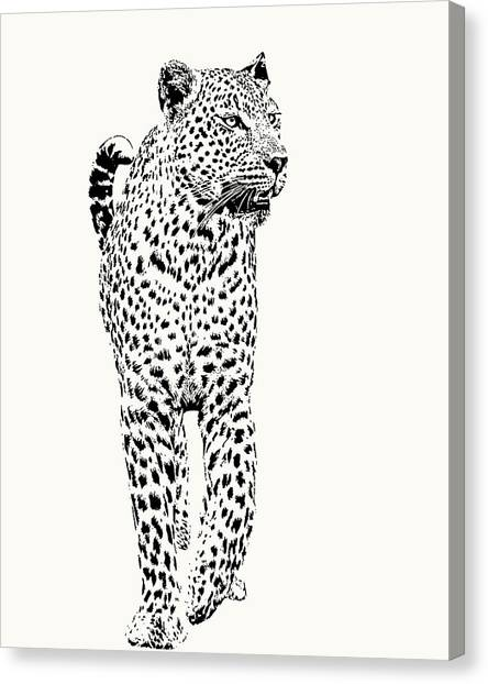 Leopard On Patrol, Front-on View Canvas Print