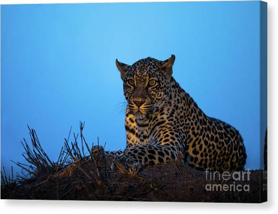 Leapords Canvas Print - Leopard Portrait  by Daryl L Hunter