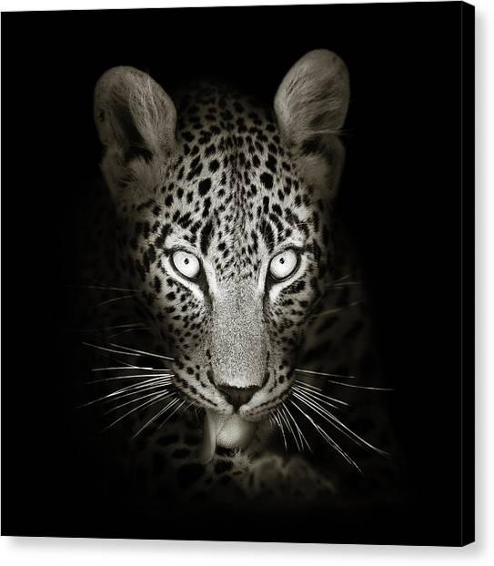 Cats Canvas Print - Leopard Portrait In The Dark by Johan Swanepoel