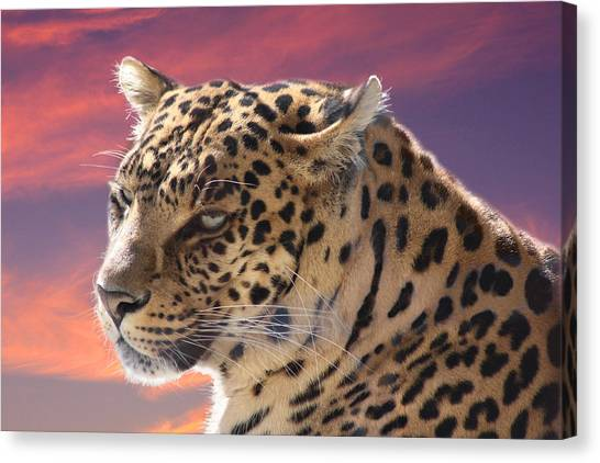 Leopard Portrait Canvas Print