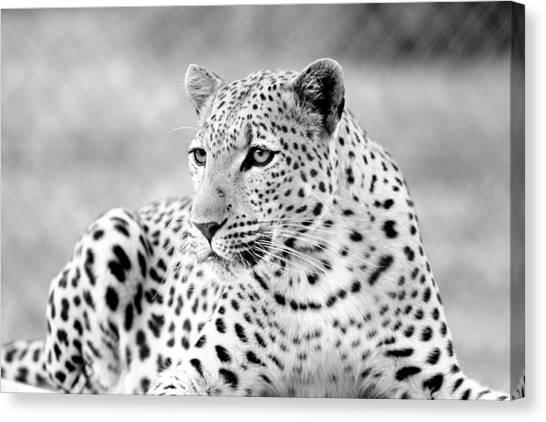 Leopard Canvas Print by Riana Van Staden