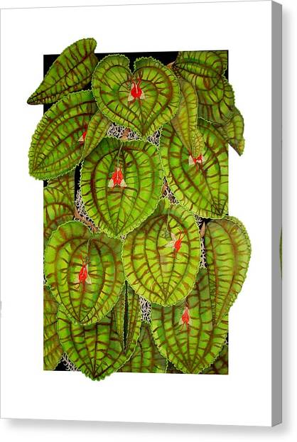 Lepanthes Calodictyon Canvas Print by Darren James Sturrock