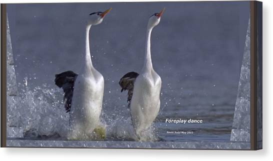 Let Humans Learn From The Nature  Foreplay Dance It Pleases Everyone Canvas Print