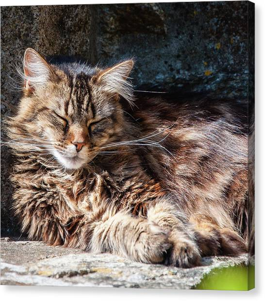 Let Me Sleep... Canvas Print