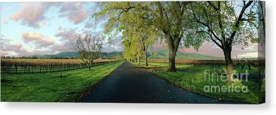 Sonoma Valley Canvas Print - Let's Drive Through The Vineyard by Jon Neidert