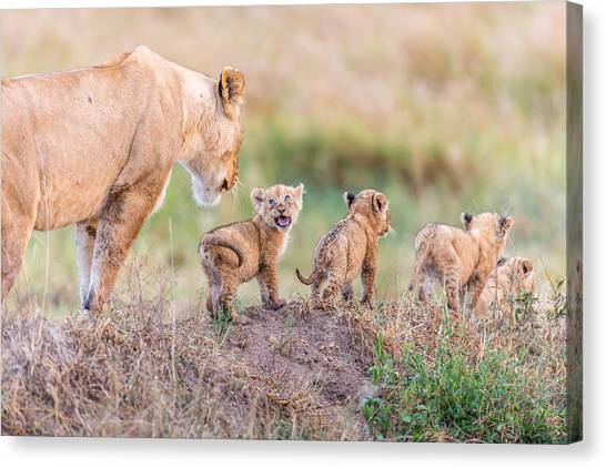 Wildlife Canvas Print - Let's Go Mom by Ted Taylor