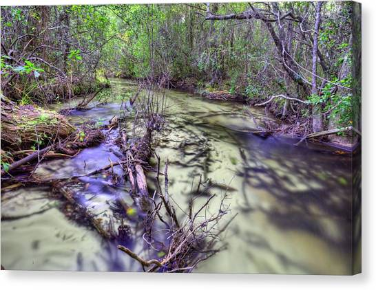 Cottonmouths Canvas Print - Let's Play Find The Cottonmouth by JC Findley