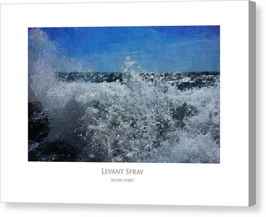 Levant Spray Canvas Print
