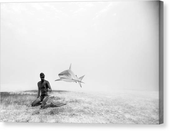 Shark Canvas Print - Levitation by One ocean One breath