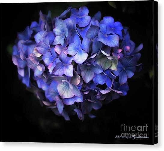 l'Hortensia bleu Canvas Print