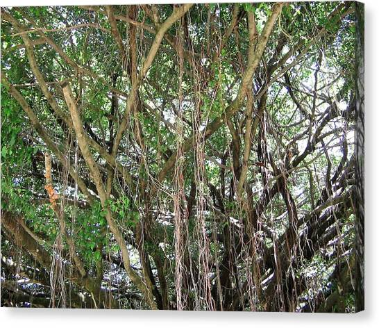 Daintree Rainforest Canvas Print - Lianas by Carmen Iglesias