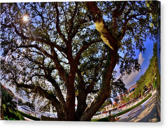 Liberty Oak Harbour Town Hilton Head Sc Canvas Print