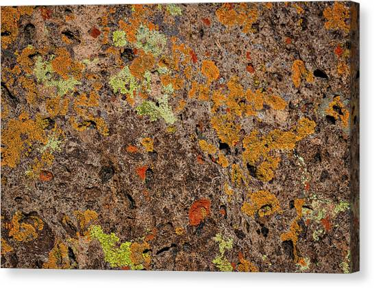 Brown Ranch Trail Canvas Print - Lichen At Bandelier - New Mexico by Stuart Litoff