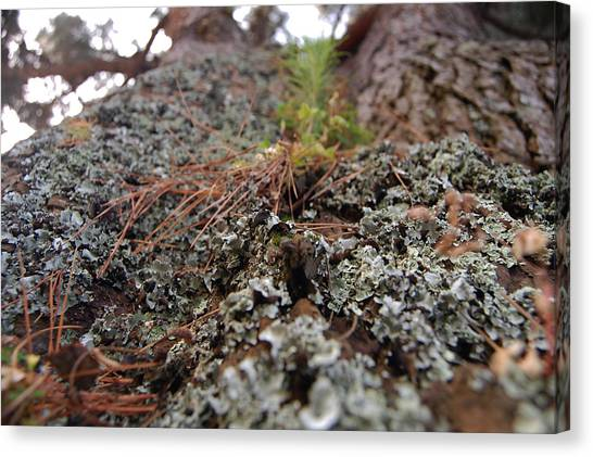 Lichen Tower Canvas Print by Jean Booth