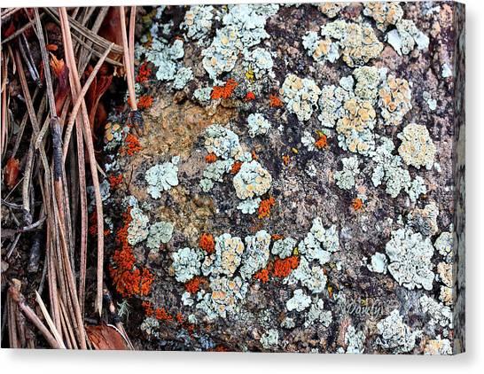 Lichen With Pine Canvas Print