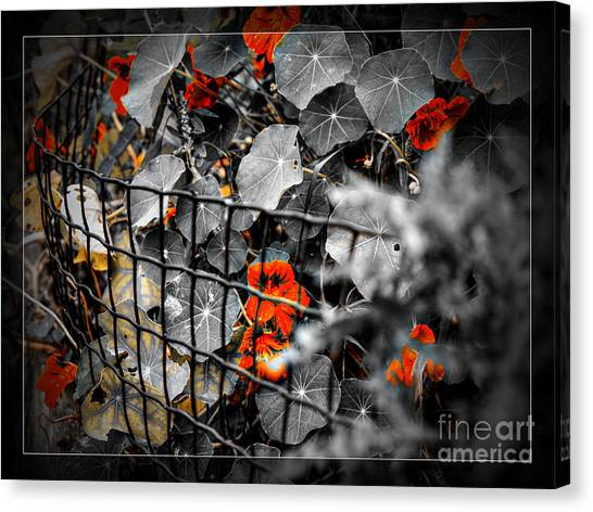 Life Behind The Wire Canvas Print