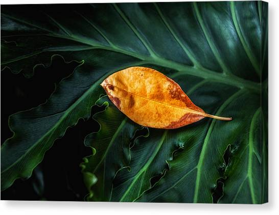 Lush Canvas Print - Life Cycle Still Life by Tom Mc Nemar