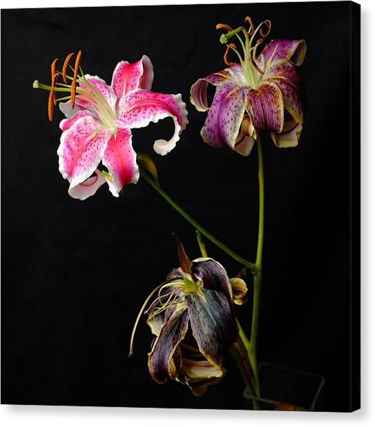Wedding Canvas Print - Life Death And In Between. The by David Haskett II