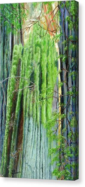 Life In A Redwood Forest Canvas Print