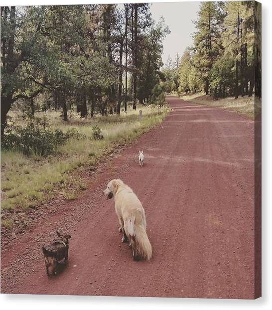 Dirt Road Canvas Print - Life Is Better With A Companion by Gloria Garcia